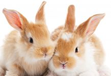 Animal Protection Laws Spreading Around the World